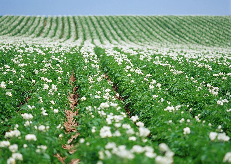 惠州规划农业产业园扶持马铃薯产业